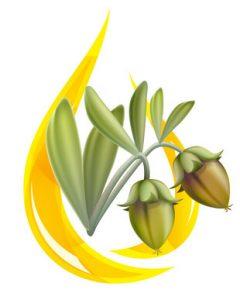 Olej Jojoba (Simmondsia Chinensis – Jojoba – Seed Oil)